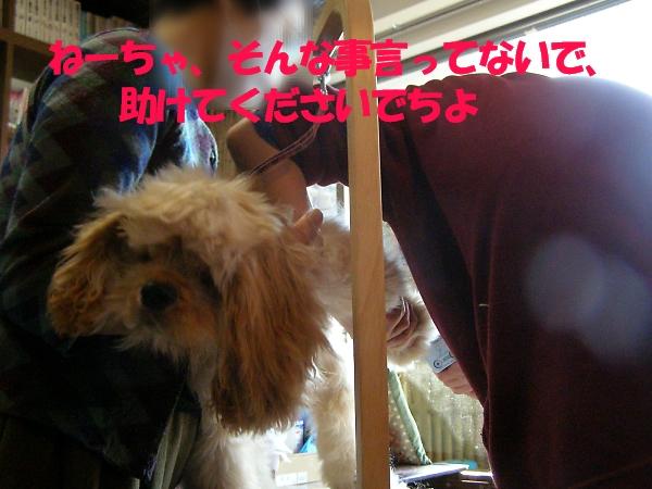 b0067012_1575962.jpg