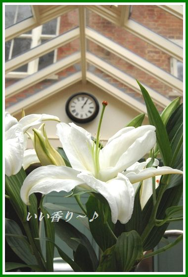 ぽかぽか♪玉ねぎとわかめの豆板醤ジンジャースープ_d0104926_2481930.jpg