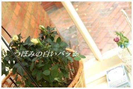 ぽかぽか♪玉ねぎとわかめの豆板醤ジンジャースープ_d0104926_248569.jpg