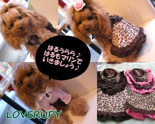 RUPY新作どどーんと入荷!!_b0084929_17485089.jpg