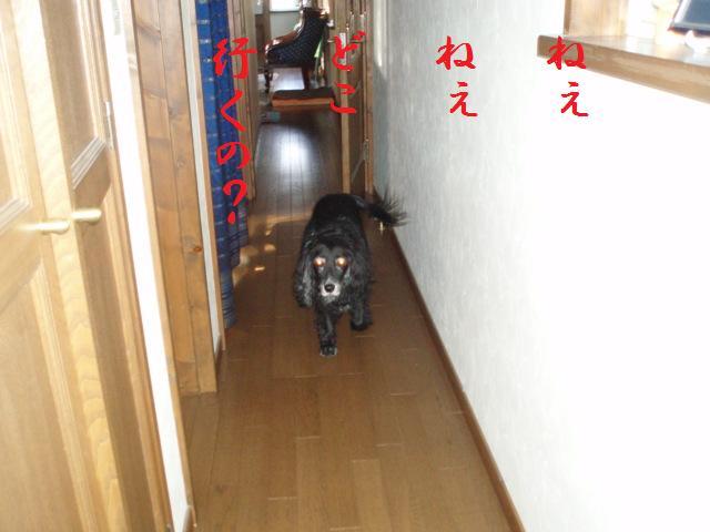 f0136555_12545388.jpg