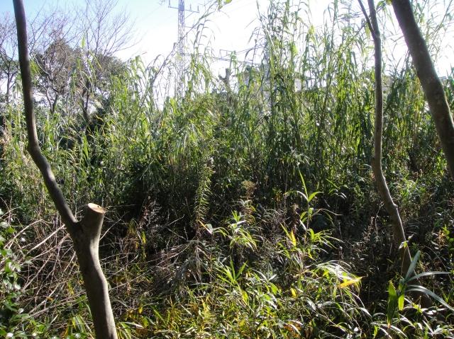 うみべの森を育てる会の定例活動日:「うみべの森の総点検」_c0108460_1811365.jpg