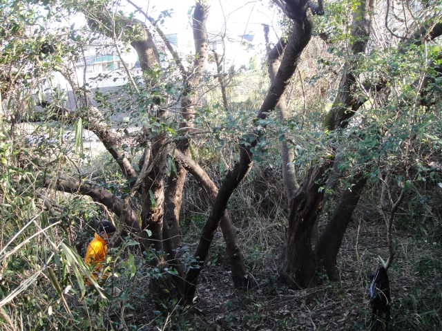 うみべの森を育てる会の定例活動日:「うみべの森の総点検」_c0108460_18125319.jpg