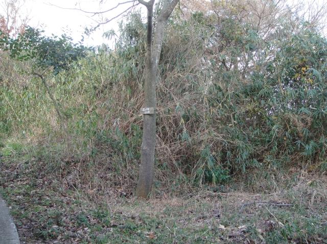うみべの森を育てる会の定例活動日:「うみべの森の総点検」_c0108460_1873554.jpg