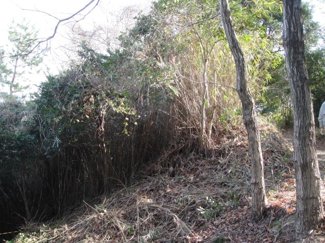 うみべの森を育てる会の定例活動日:「うみべの森の総点検」_c0108460_1883558.jpg