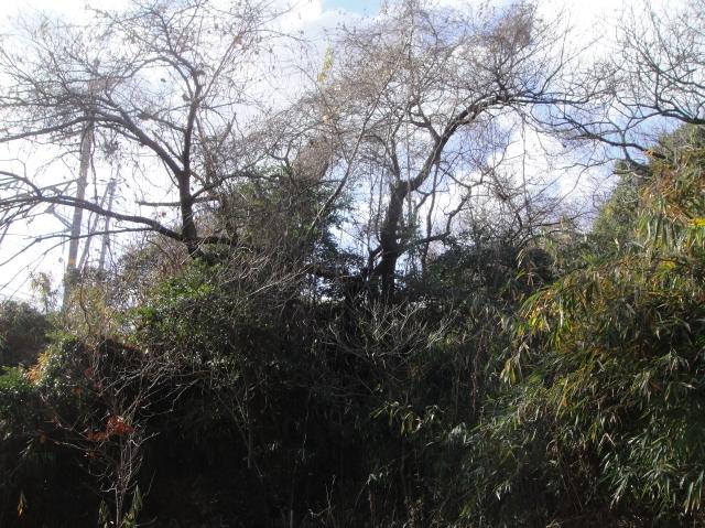 うみべの森を育てる会の定例活動日:「うみべの森の総点検」_c0108460_188422.jpg