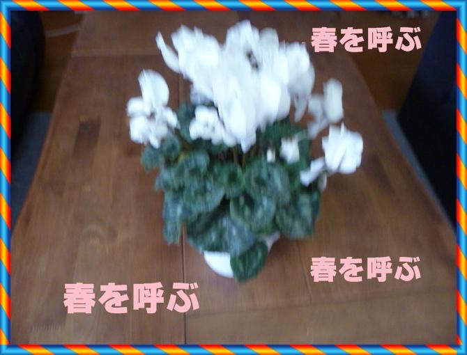 f0208760_1419637.jpg