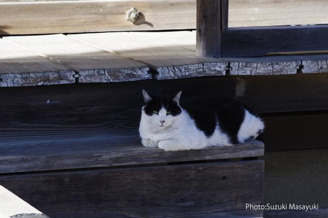 そのお寺に住まう猫達に。。_b0174465_23542474.jpg