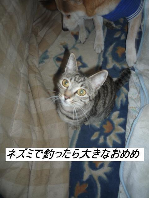 b0112380_1224221.jpg
