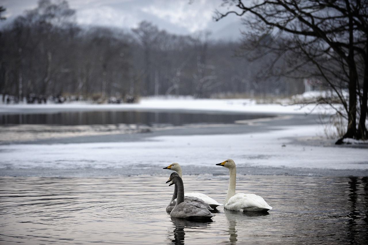 静かな湖畔の、、、、_e0171886_18293226.jpg