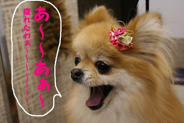 2009最後のお客様!!_b0130018_1851499.jpg