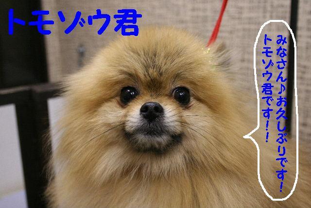 2009最後のお客様!!_b0130018_1852378.jpg