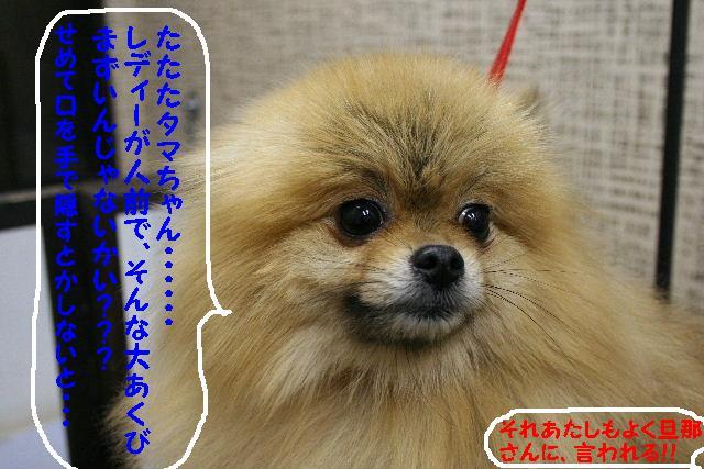 2009最後のお客様!!_b0130018_1852821.jpg