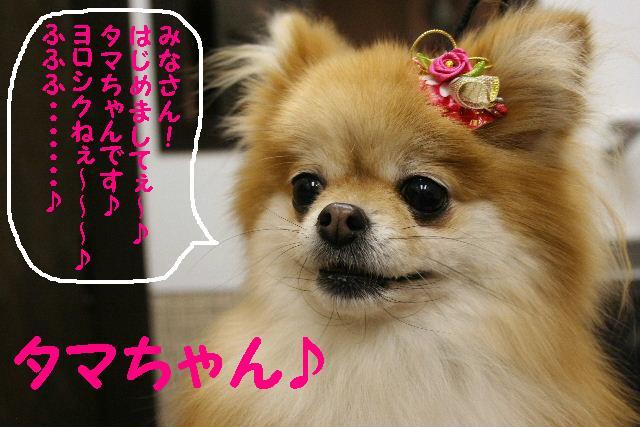 2009最後のお客様!!_b0130018_185710.jpg