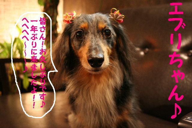 2009最後のお客様!!_b0130018_187756.jpg