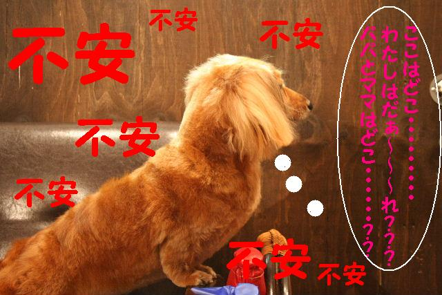 2009最後のお客様!!_b0130018_1885958.jpg