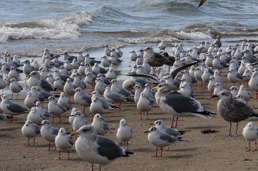 今 日 の 浜 辺 No.9_d0039021_1837326.jpg