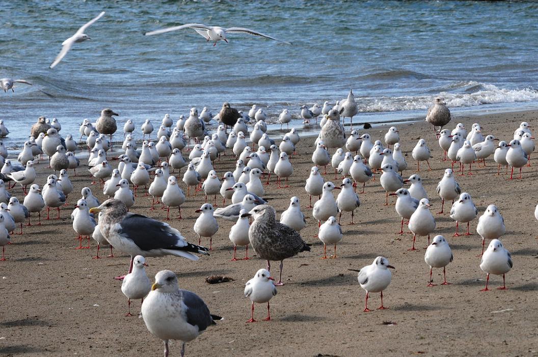 今 日 の 浜 辺 No.9_d0039021_18374052.jpg