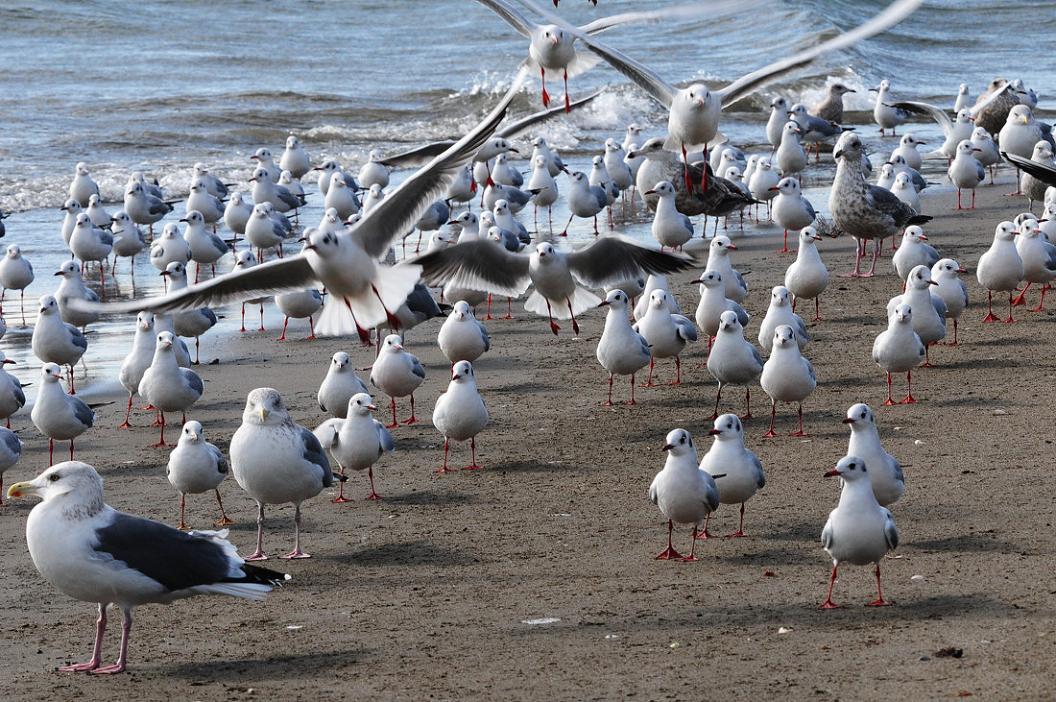 今 日 の 浜 辺 No.9_d0039021_18374884.jpg
