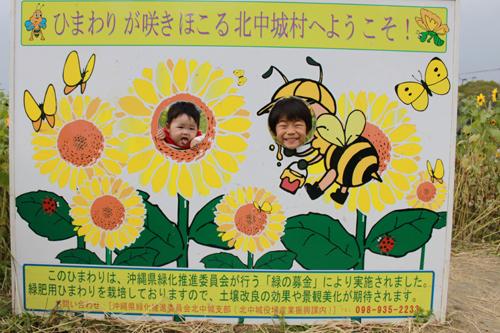 1月24日沖縄は只今ヒマワリ満開!!_c0070933_2222237.jpg