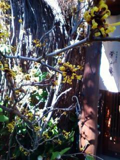 紫仙庵の庭・・・2_f0138653_17563441.jpg