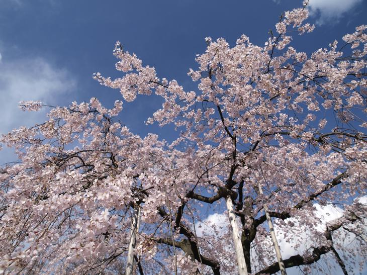 春を待ちわびる_a0100959_0114848.jpg