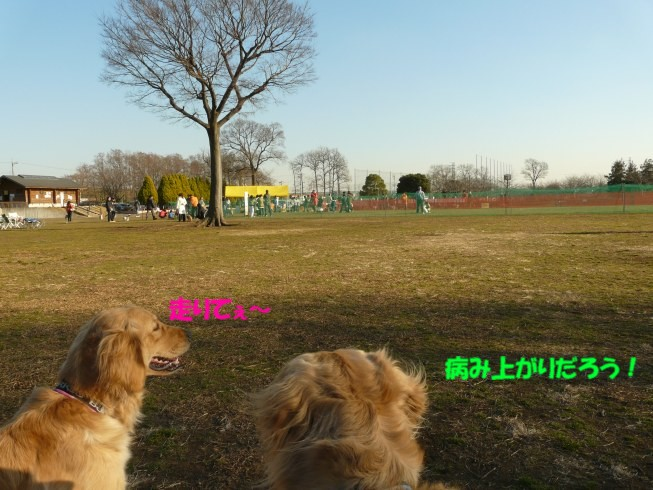 c0199365_18393997.jpg