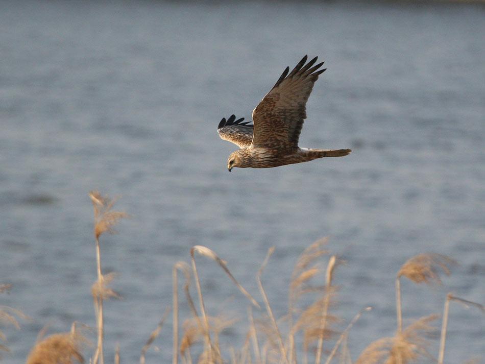 久しぶりに丸一日、鳥見! !_e0143879_1856362.jpg