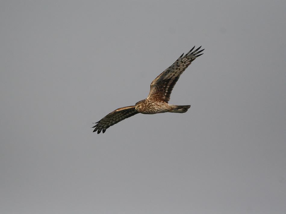 久しぶりに丸一日、鳥見! !_e0143879_18565760.jpg
