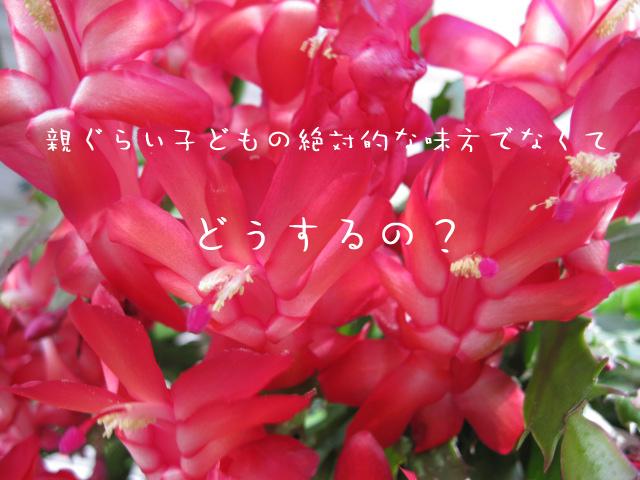 c0007384_8365226.jpg