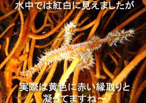 f0144385_4105375.jpg