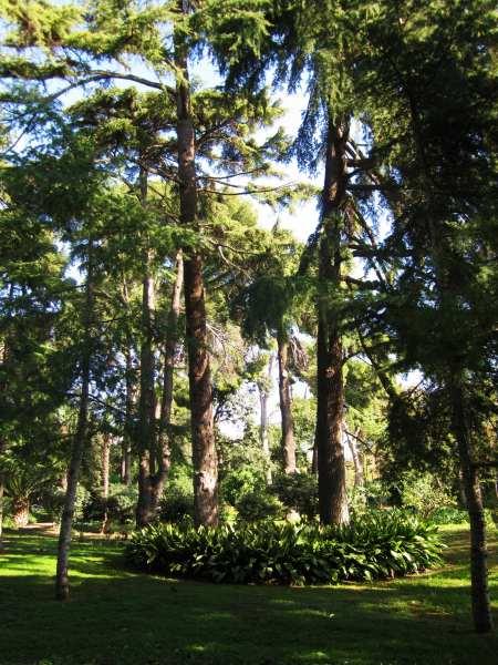 ペドラルベス宮の散歩  Paseo in el Palau de Pedralbes_b0064411_7321729.jpg