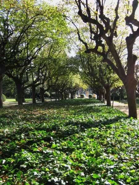 ペドラルベス宮の散歩  Paseo in el Palau de Pedralbes_b0064411_7375658.jpg