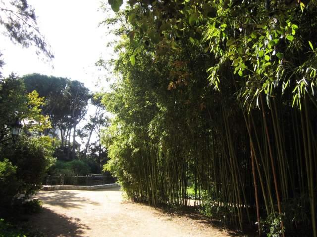 ペドラルベス宮の散歩  Paseo in el Palau de Pedralbes_b0064411_7434137.jpg