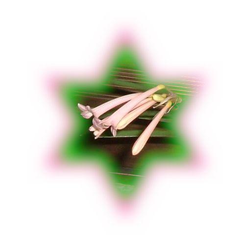 d0048312_2102281.jpg