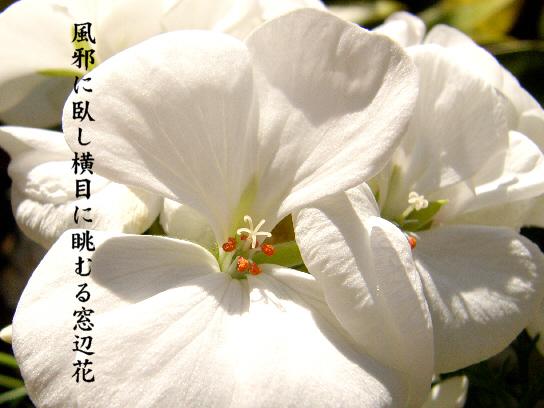 風邪_e0099713_1752320.jpg