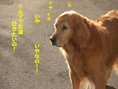f0118135_052381.jpg