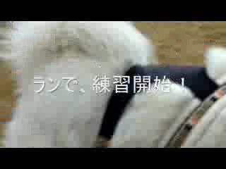 宝塚ガーデンフィールズ_b0177436_1656556.jpg