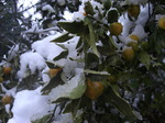 冬の実.JPG