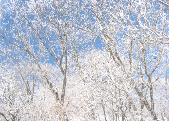 雪の華_d0129249_10524198.jpg