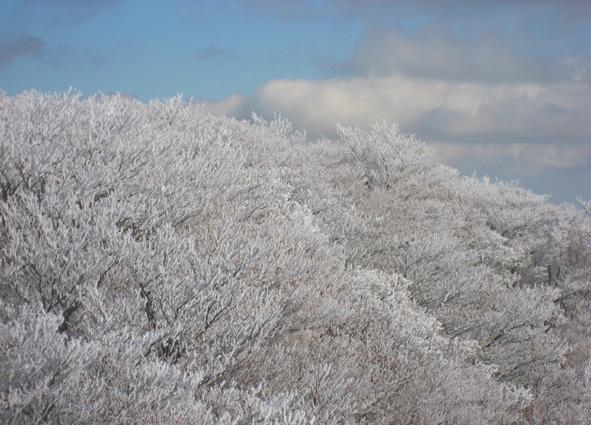 雪の華_d0129249_10551675.jpg
