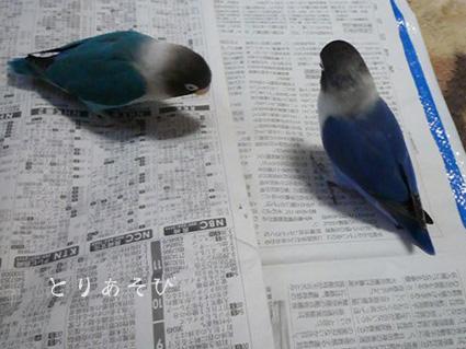 くずもちの恋_e0147757_2237557.jpg