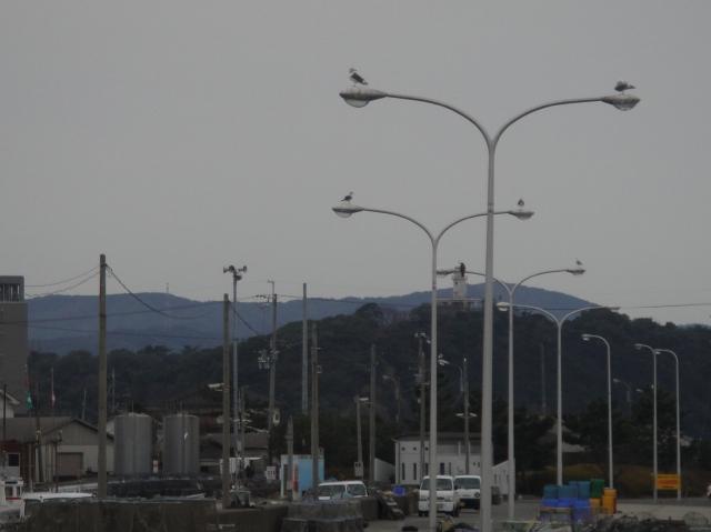 淡輪漁港散策_c0108460_15594481.jpg