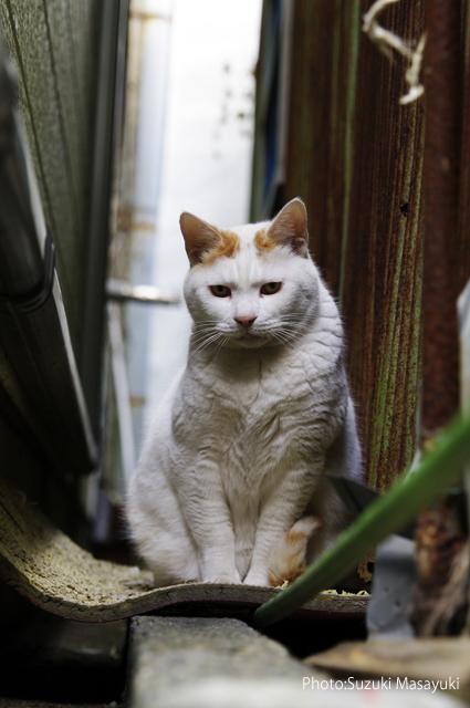 その路地裏の優しい猫に。。_b0174465_793898.jpg