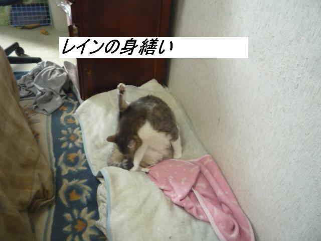 b0112380_10505100.jpg