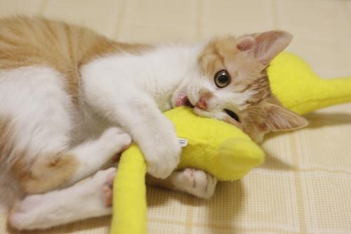 黄猫さんを押さえ込んでケリケリする澪っち