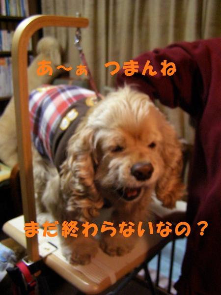 b0067012_21465974.jpg
