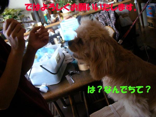 b0067012_21573410.jpg