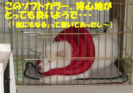 f0121712_21394669.jpg