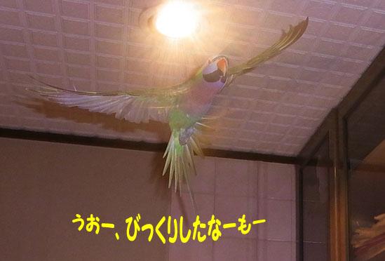 c0133013_205014.jpg